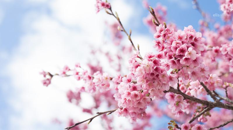 Cherry TreeSM